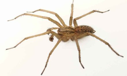 Keep Spiders Away From House